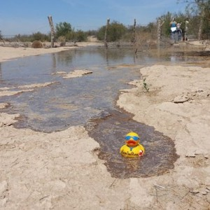 COLORADO RIVER DUCKY SOCIAL MEDIA CAMPAIGN